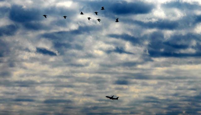 図6 鳥よりも早く飛ぶ飛行機